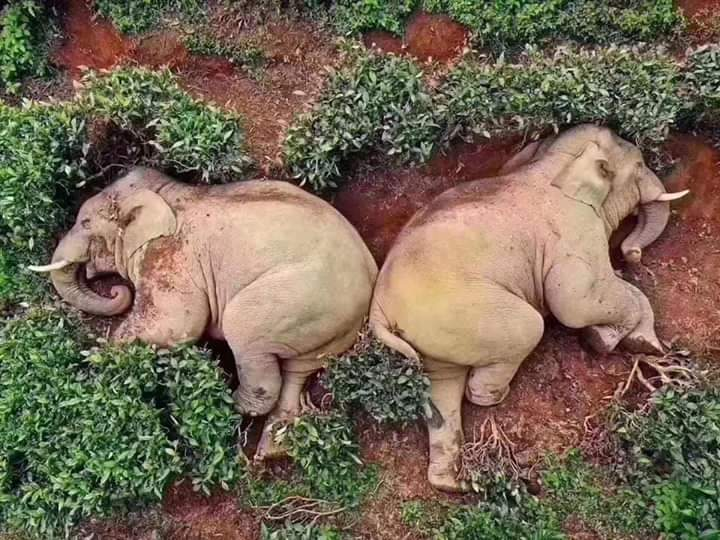 drunkelephants
