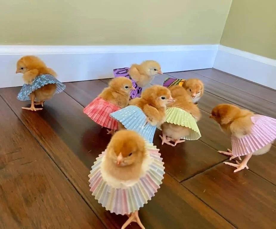 cupcakecuties