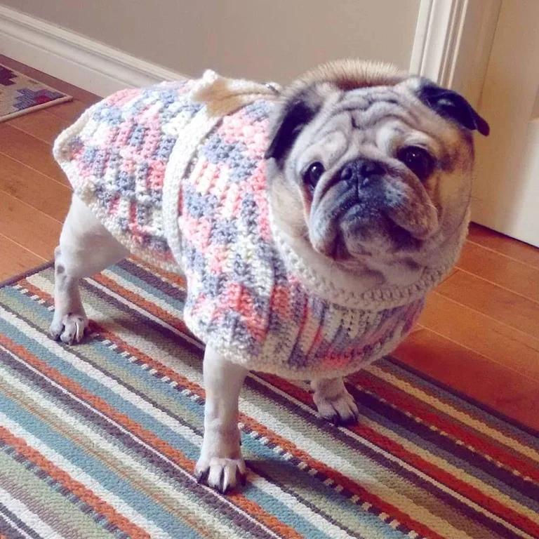 sweaterDog